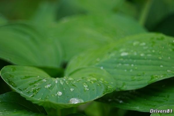 緑の上に散らばる透明の粒