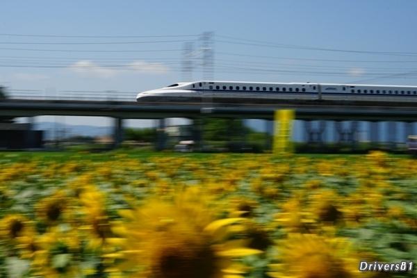 ひまわり畑で新幹線流し撮り