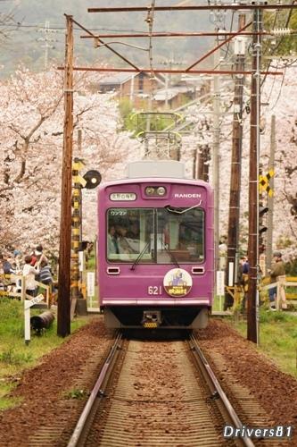 嵐電・桜のトンネル。ありがとう、Vサイン