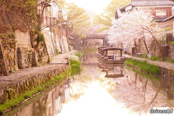 桜と桜の下に並べられた船と、鏡に映し出された八幡堀