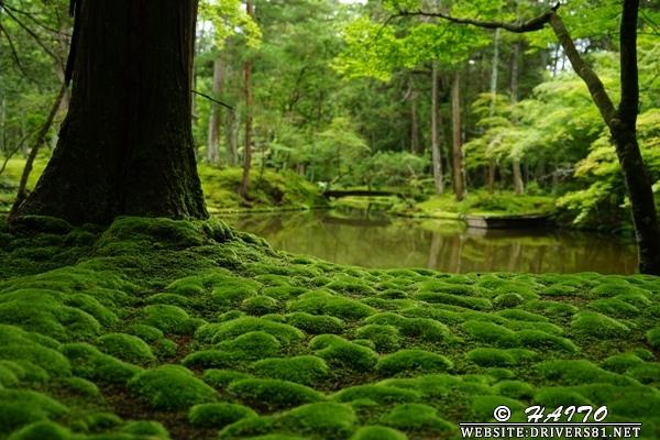 雨上がり、苔日和。拝観料3,000円の庭園